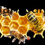 Včelaři Šumice